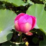 きっとコンセプトは天国…弘前の隣にある青森県平川市にある猿賀神社。ジブリ的洋館『盛美園』もステキ。