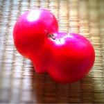 トマトに何かけて食べますか?