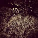 冬の奥入瀬の森もステキですよ