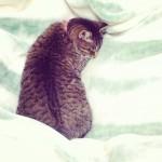 はやくも 初夢態勢にはいっております。 #初夢 #猫