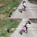 どこにでも付いてくる #猫 #cat #相棒 #兄弟 #守ってるつもり