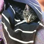 Cat in my bag! かわいーから許す
