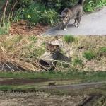 どこまでもついてくるぞ #ウチの猫 #猫