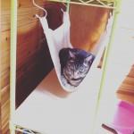 手作り猫ハンモック。3日無視後、今日初めて自ら乗りました! うれし〜い。#猫 #DIY #ハンモック #表情は暗いが