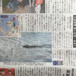 ある日 水の中 エッ〜! #十和田湖 #熊