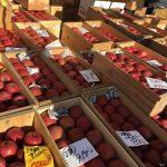 朝市でりんごたちが行儀よく並んでました。大事に食べてもらうんだよ。#りんご