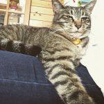 たまには甘えてあげるにゃー #cat